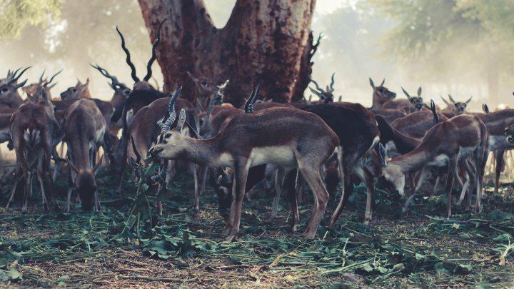animal-photography-animals-antelope-831244